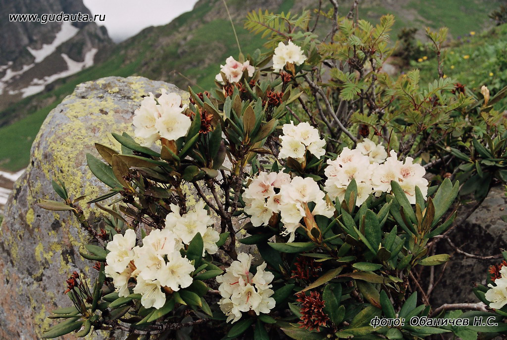 Садовые цветы в абхазии